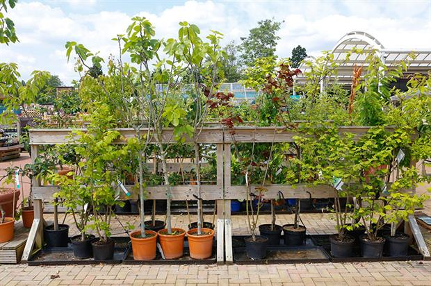 Garden centre trees - image: HW