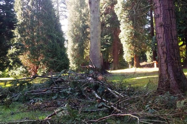 Fallen branches from the Old Man of Kent. Image: Bedgebury Pinetum