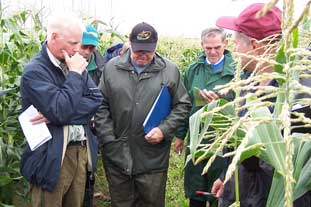 Sweetcorn trials produced good, if watery yields - photo: HW