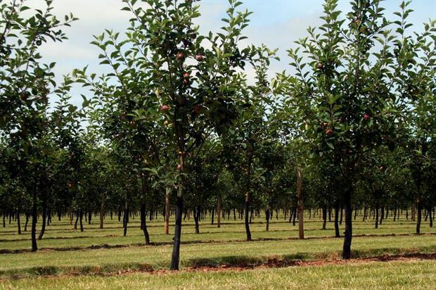Thatchers Cider orchard - image:HW