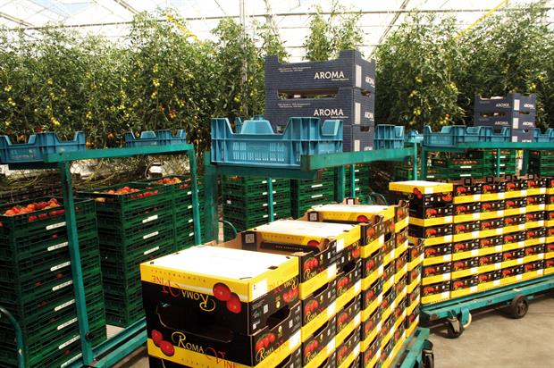 Tomatoes: Dutch growers advised to consider UK siting - image: HW