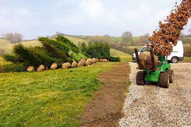 Instant impact: planting of large material is increasingly popular option on estates - image: The Tree & Hedge Co