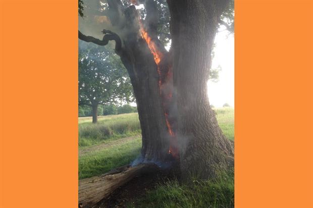 Oak on fire in Richmond Park. Image: Supplied