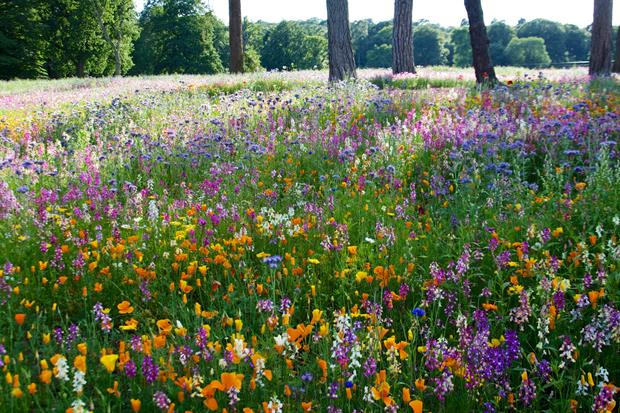 The annual meadow at Trentham. Image: Nigel Dunnett