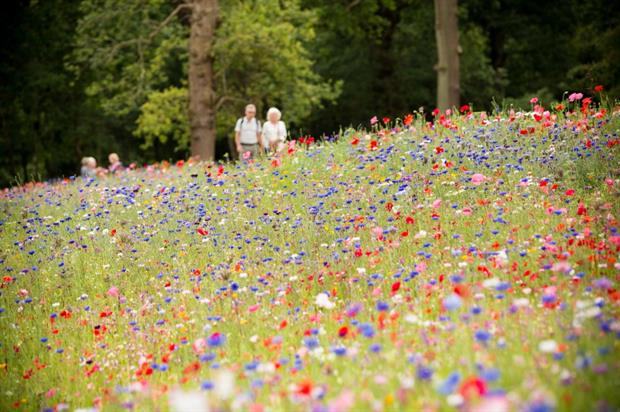 A Trentham meadow in July. Image: The Trentham Estate