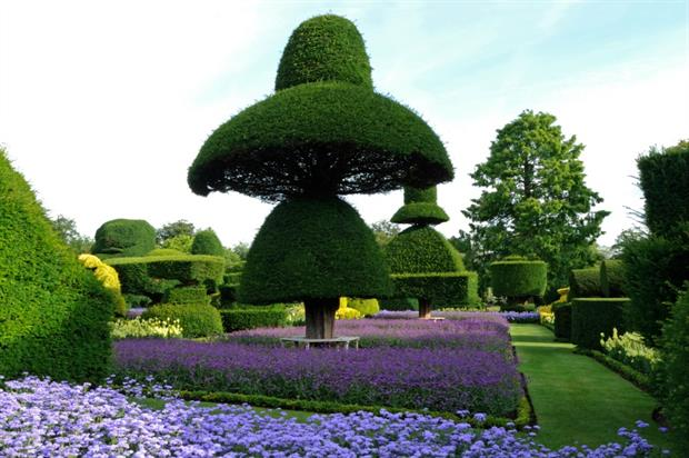 The Umbrella Tree at Levens Hall. Image: Levens Hall