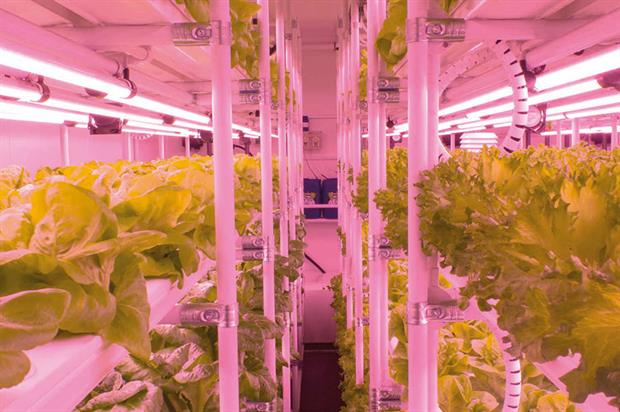 Project Urban Grow, a trial version of V-Farm vertical farming system - image: HydroGarden