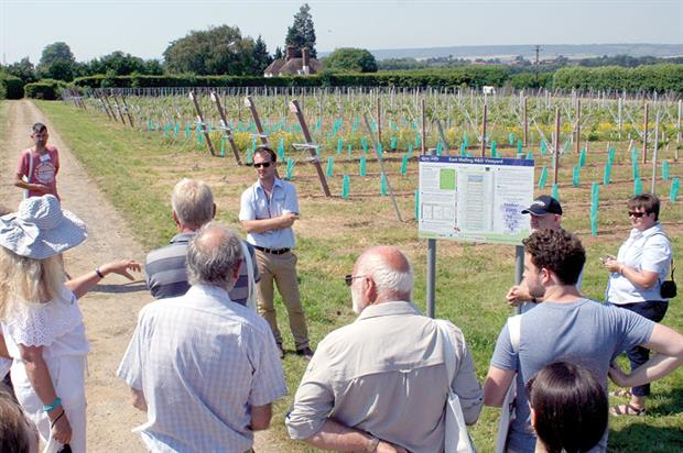 Fruit Focus: visitors offered tour of site's field research