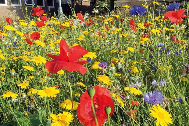 Wild flower meadows: sites surveyed by researchers - image: Graham Stone