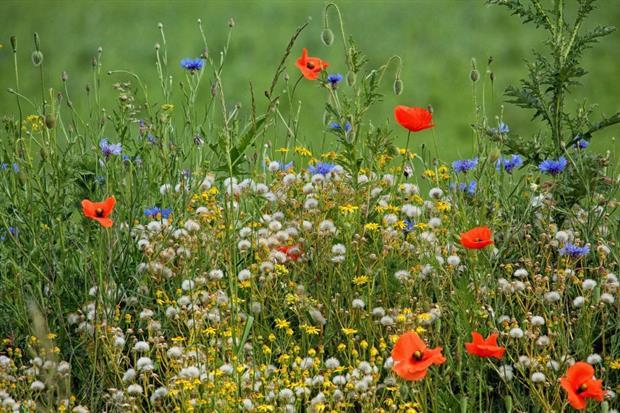 Wildflowers. Image: Pixabay