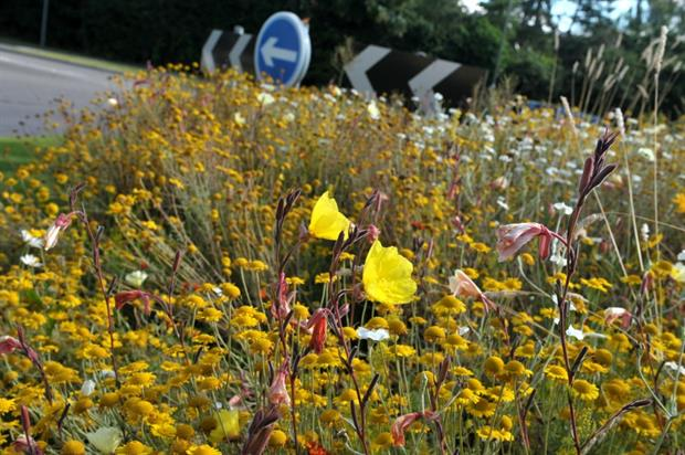 Meadow on roundabout in Woking. Image: Supplied