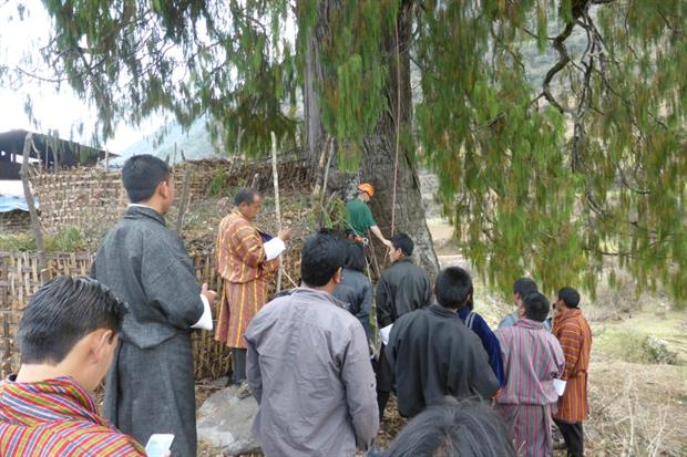 RBGE staff work with conservationists in Bhutan to save the Sacred Cyprus. Image: Supplied