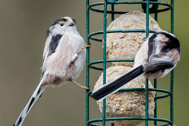 Bird feeder - image: Pixabay