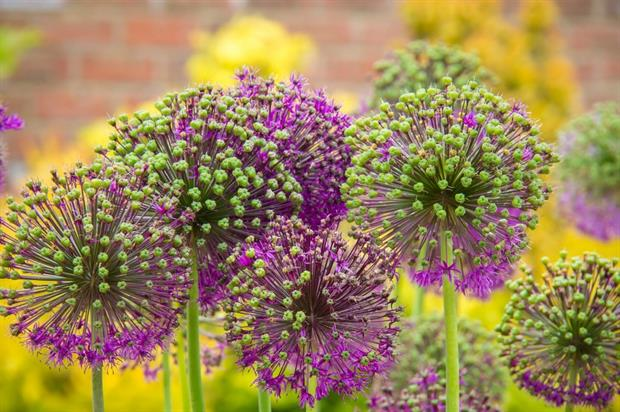 APL announces winners of BBC Gardeners' World Live competition. Image: Pixabay