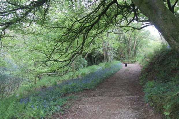 Wildlife corridor could be severed by new development, campaigners say. Image: Pixabay