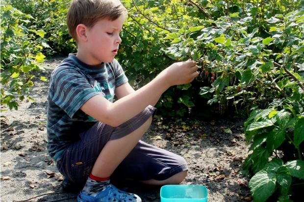 The Garden Classroom wins grant. Image: Pixabay