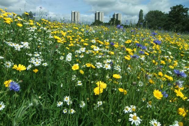 Buglife Scotland wildflowers. Image: Supplied