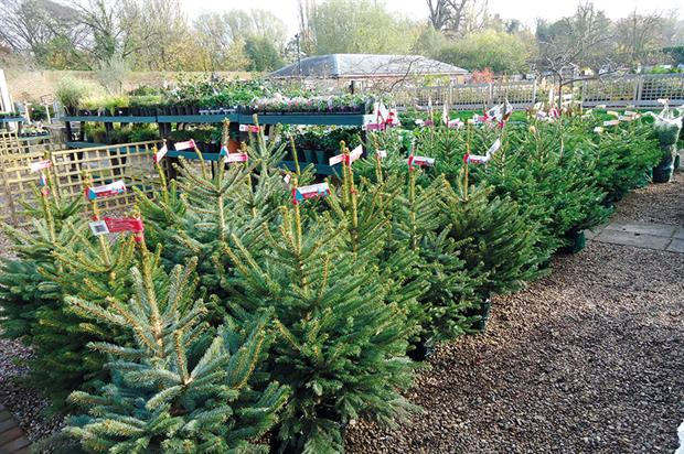 Christmas trees: higher prices predicted for imports should the UK vote for Brexit - image: HW