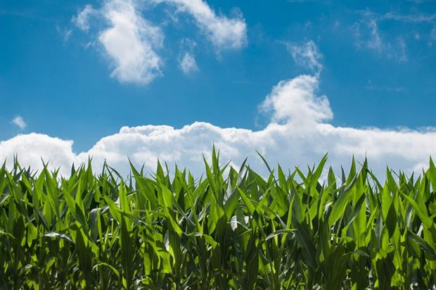 EU experts to decide on glyphosate license reapprova this week. Image: Pixabay
