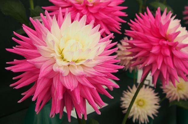RHS Garden Wisley - image: Pixabay