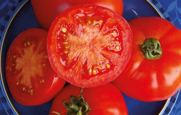 Tomato 'Red Bodyguard'