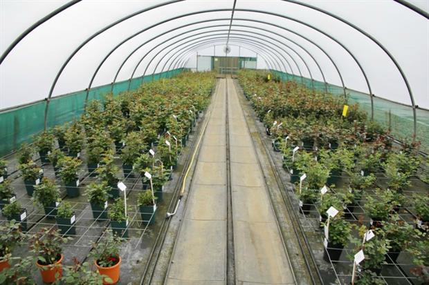 First year pot rose trials