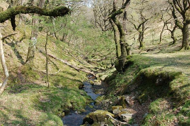 North Devon is one of 12 Nature Improvement Areas. Image: Pixabay