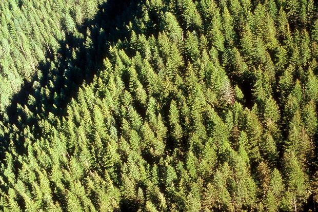 Image: US Forest Service