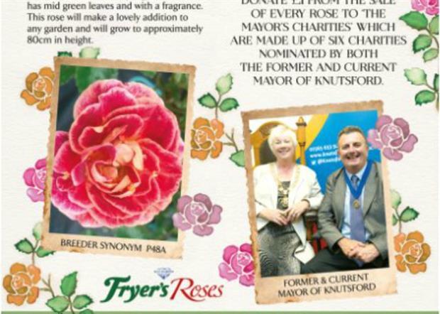 Image: Fryer's Roses