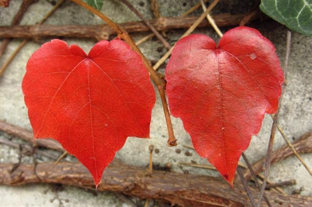 Garden of Wales encouraging romance. Image: Pixabay