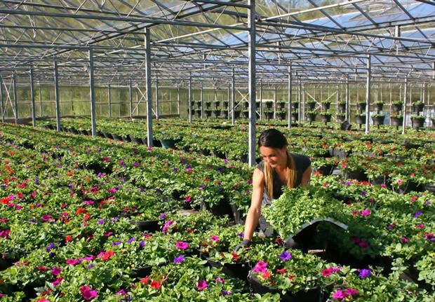 Plantscape nursery - image: Plantscape