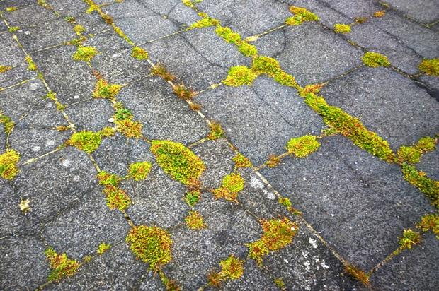Moss in footpath. Image: Pixabay