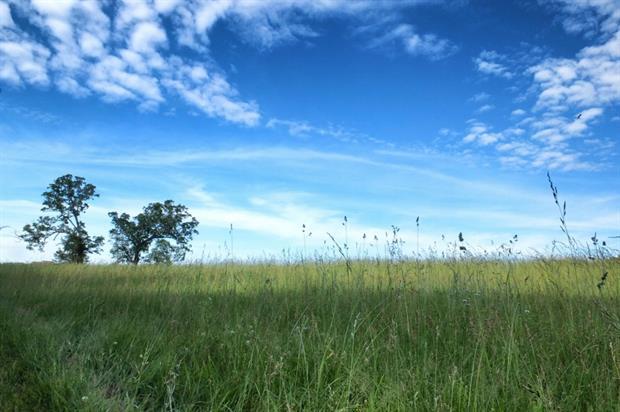 Long grass. Image: MorgueFile
