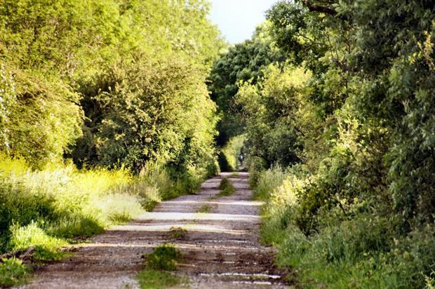 Woodland road. Image: MorgueFile