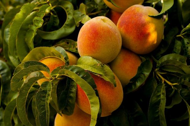 Soft fruit greenhouse will open to public as part of new Floors Castle development. Image: Pixabay