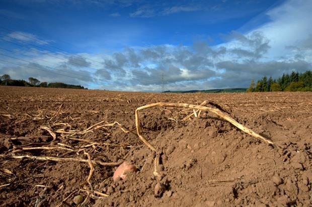 Potato field in Scotland - image: Morguefile