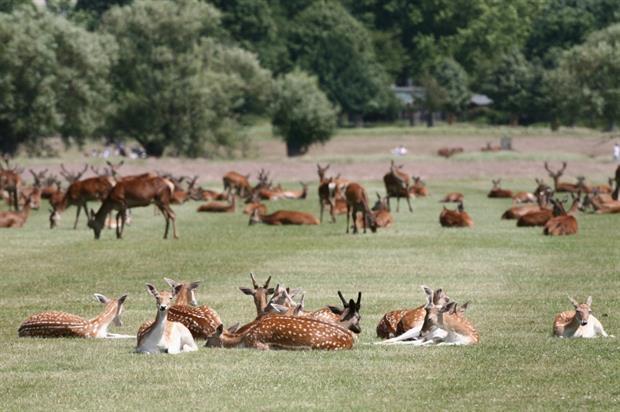 Richmond Park in summer. Copyright: Giles Barnard / The Royal Parks