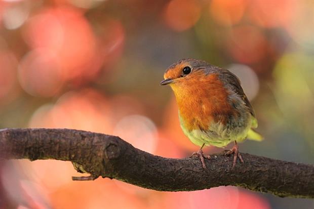 New bird habitat supplier for Green-tech. Image: Pixabay