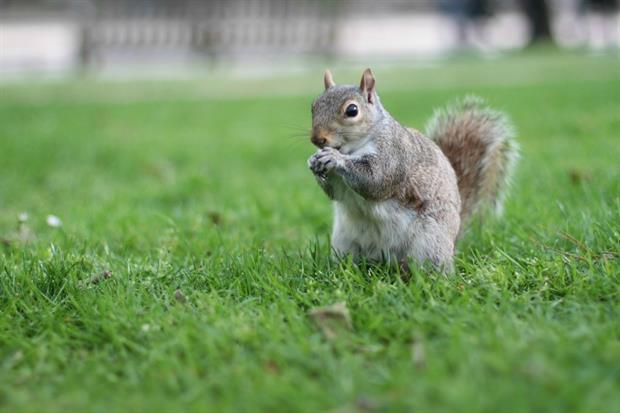 Campaigners claim glyphosate killed squirrels. Image: Pixabay
