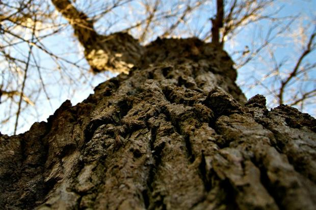 Treework wins tree survey contract with Aster Group. Image: Pixabay