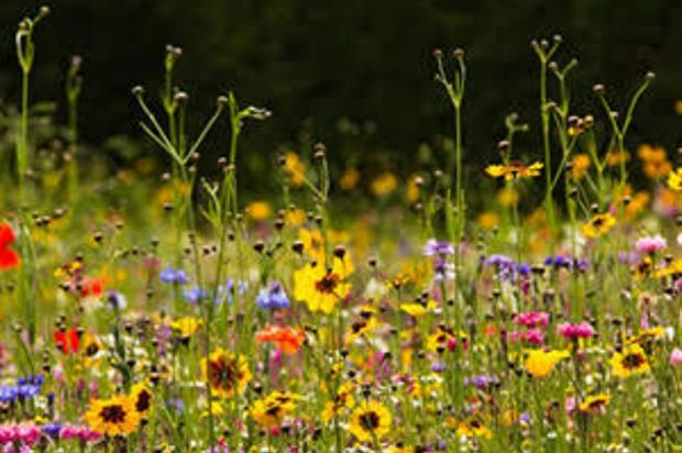 Wildflowers. Image: Supplied
