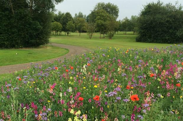Wildflowers on golf course. Image: Germinal