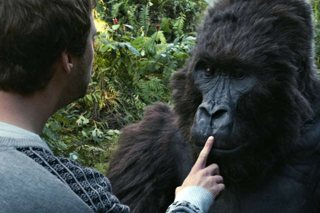 Moneysupermarket.com: new ads feature gorillas
