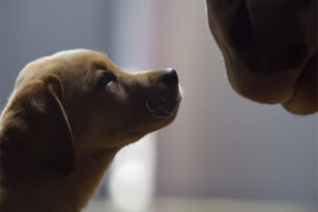 Budweiser: one of the few viral highlights of a 'disappointing' 2014 Super Bowl