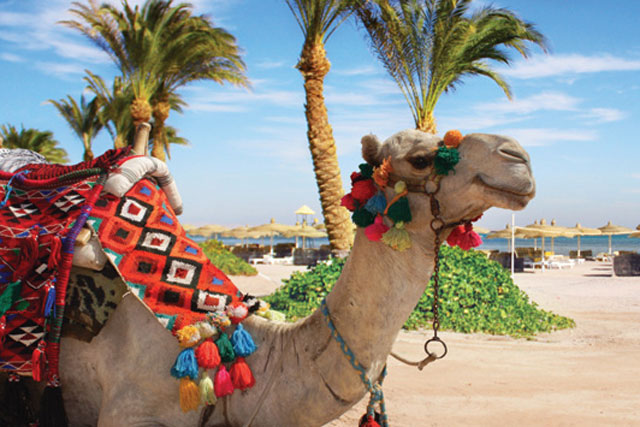 Thomas Cook: overhauls its 2013 summer marketing strategy