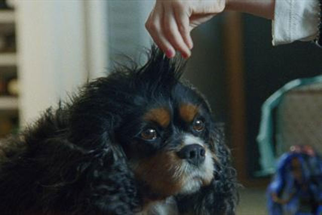 Boots ad: sparked complaints from dog lovers