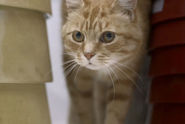 Ikea's 'cats' TV ad was one of the Gold BIG Awards winners