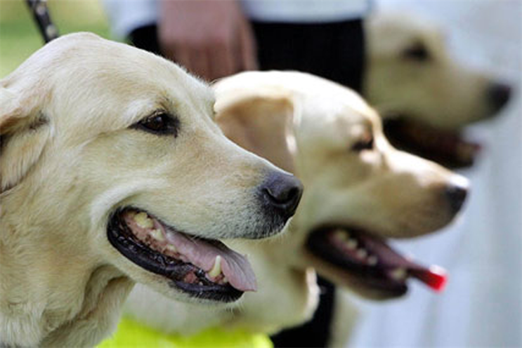 Guide Dogs: appoints MBA