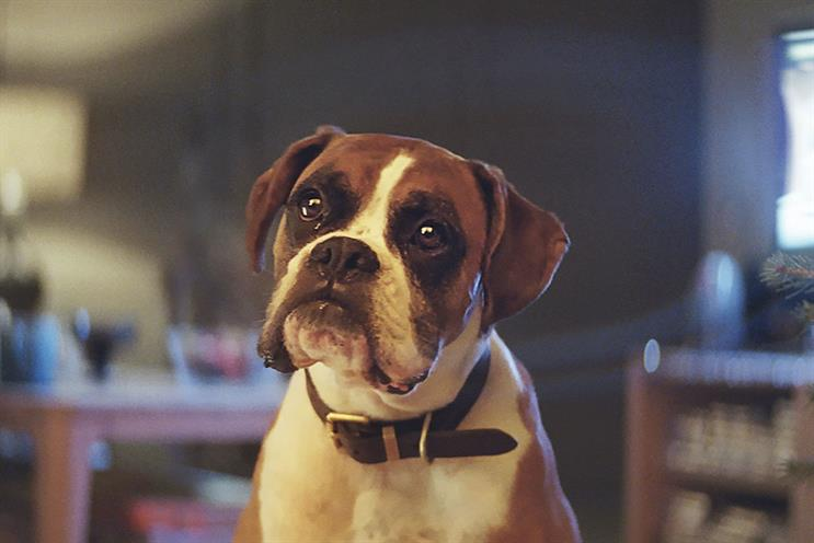 John Lewis' 'Buster the Boxer' won a gold Arrow for A&E/DDB