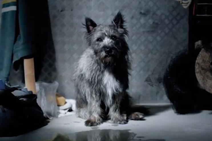 Dogs Trust: awareness drive